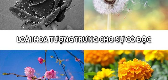 Loài hoa tượng trưng cho sự cô độc