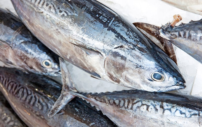 Cá ngừ vằn