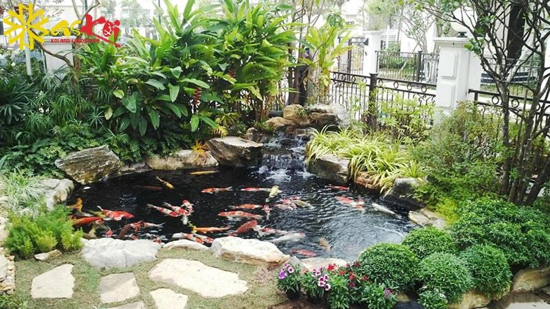 Hồ cá chép Nhật sinh động trong sân vườn