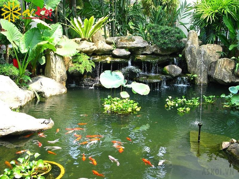 Hồ cá sinh động hơn với thác nước và hệ thống vòi phun nước