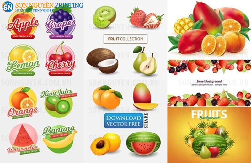 Các mẫu tem nhãn dán hoa quả phổ biến trên thị trường